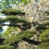 Токио. В парке у императорского дворца