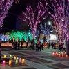 Цукуба. Рождественская иллюминация